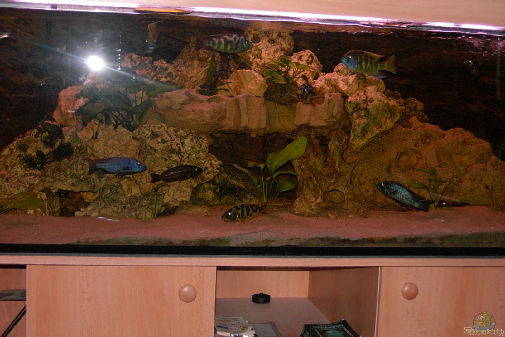 aquarium von 4649 malawibecken. Black Bedroom Furniture Sets. Home Design Ideas