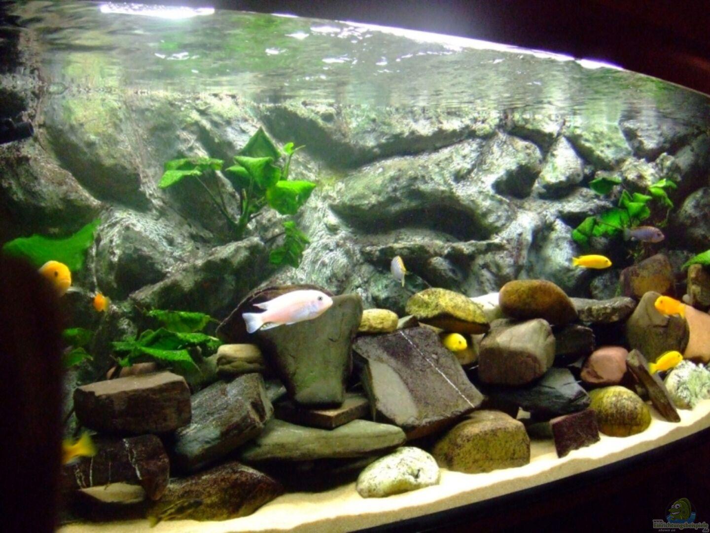 aquarium von dennis kremer becken 4847. Black Bedroom Furniture Sets. Home Design Ideas