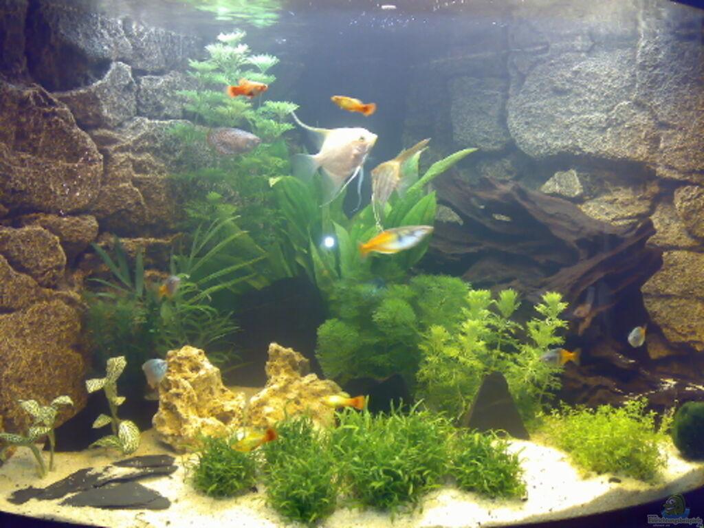 aquarium von marcel fischer becken 4987. Black Bedroom Furniture Sets. Home Design Ideas
