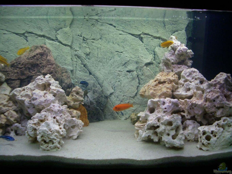 aquarium von kai verholen becken 5062. Black Bedroom Furniture Sets. Home Design Ideas