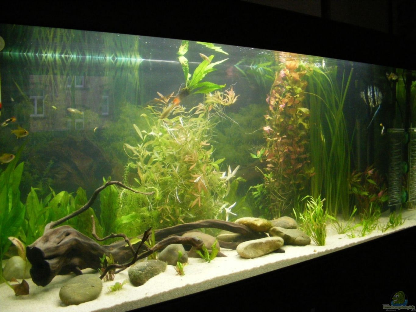Aquarium von adamov becken 5133 for Aquarium 120x40x50