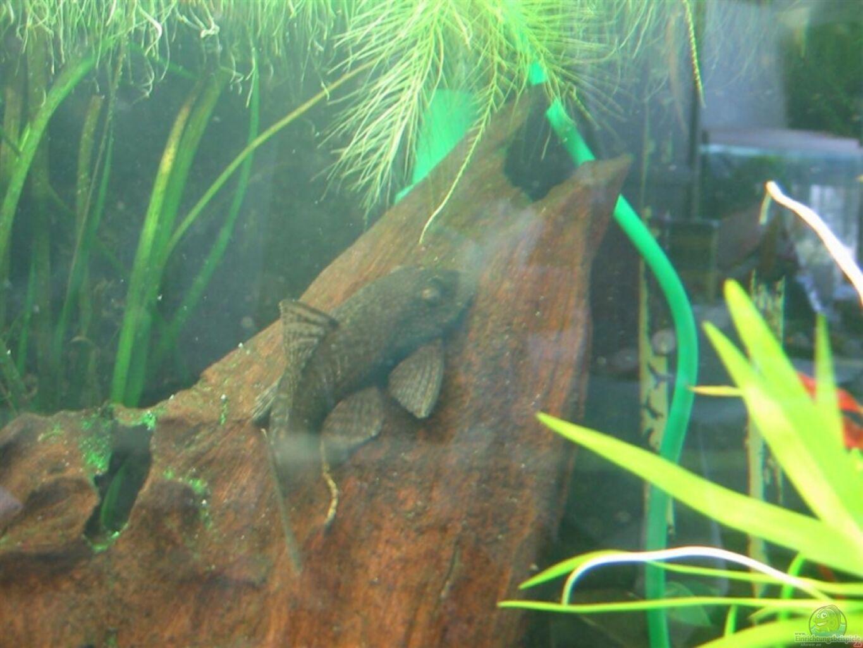 aquarium von arthur kramer becken 5415. Black Bedroom Furniture Sets. Home Design Ideas