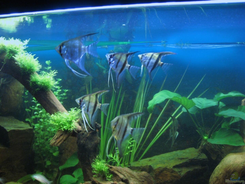 Aquarium von Christian Messner: Becken 5477