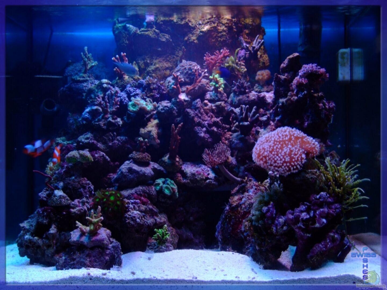 aquarium von sascha bill becken 5508. Black Bedroom Furniture Sets. Home Design Ideas