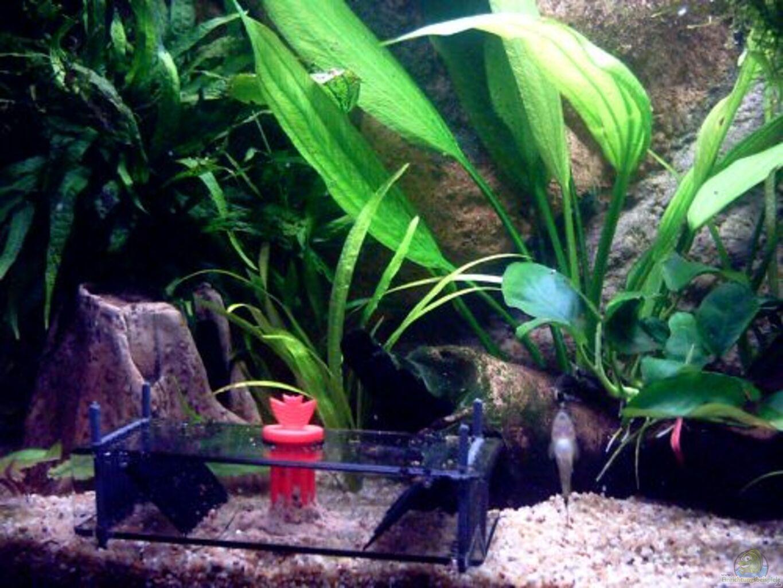 aquarium von thomas schmidt becken 5584. Black Bedroom Furniture Sets. Home Design Ideas