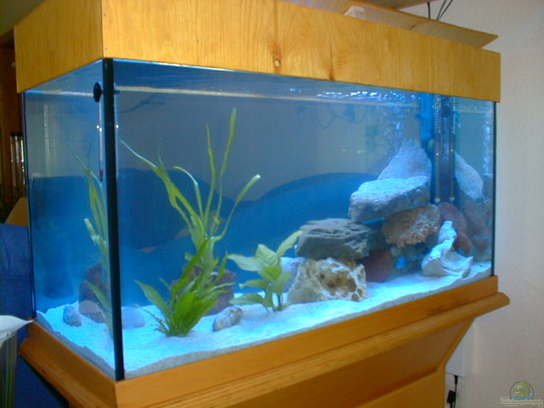 aquarium von andreas sachisthal becken 56. Black Bedroom Furniture Sets. Home Design Ideas