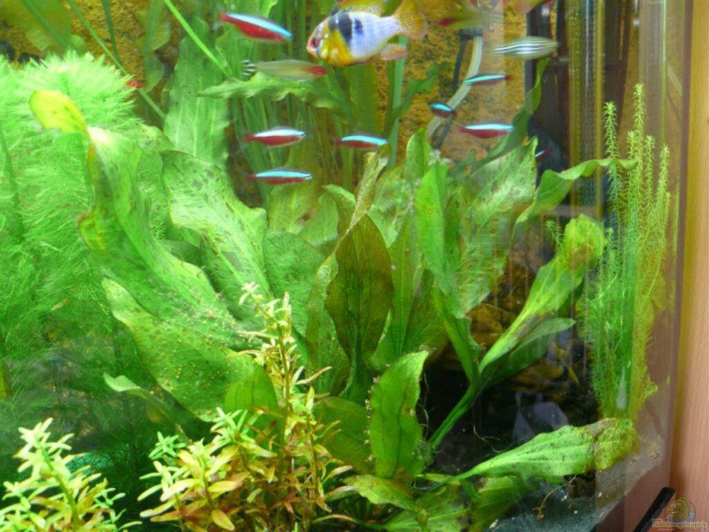 aquarium von ralf hoffmann juwel vision 260. Black Bedroom Furniture Sets. Home Design Ideas
