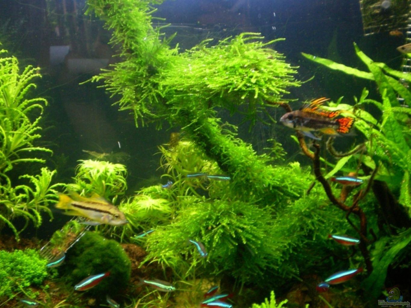 Example no 5691 from the category mixed america tanks for Aquarium wurzel