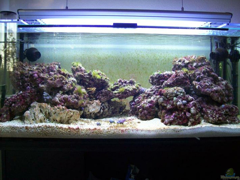 aquarium von alper alihsan becken 5853. Black Bedroom Furniture Sets. Home Design Ideas