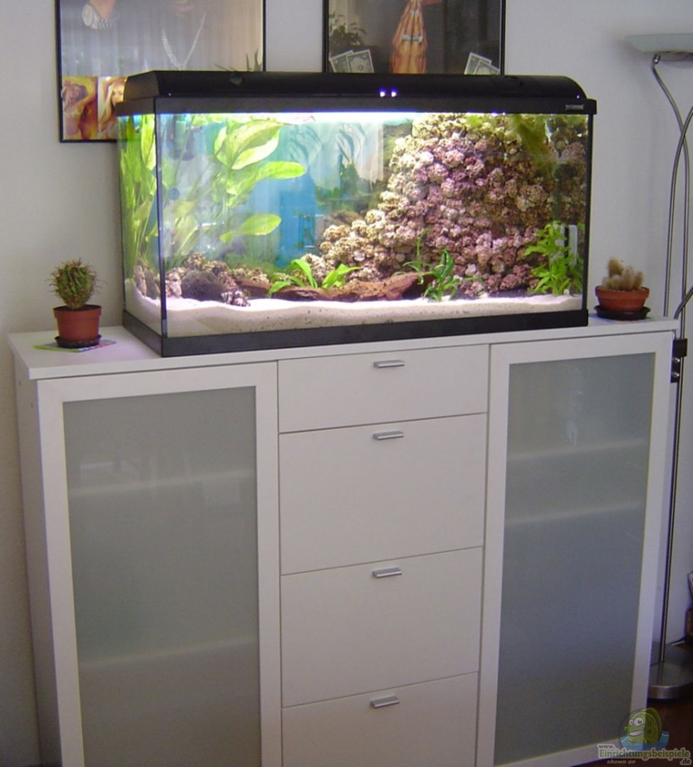 aquarium becken 5862 aus becken 5862 von thomas kuban. Black Bedroom Furniture Sets. Home Design Ideas