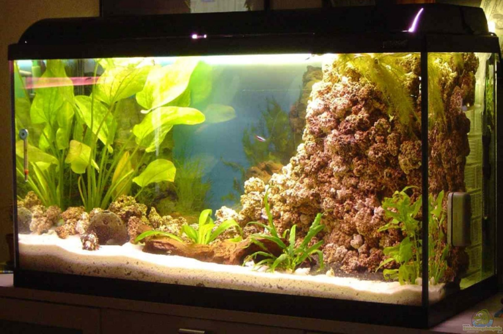 Aquarium von thomas kuban becken 5862 for Waterhome aquarium