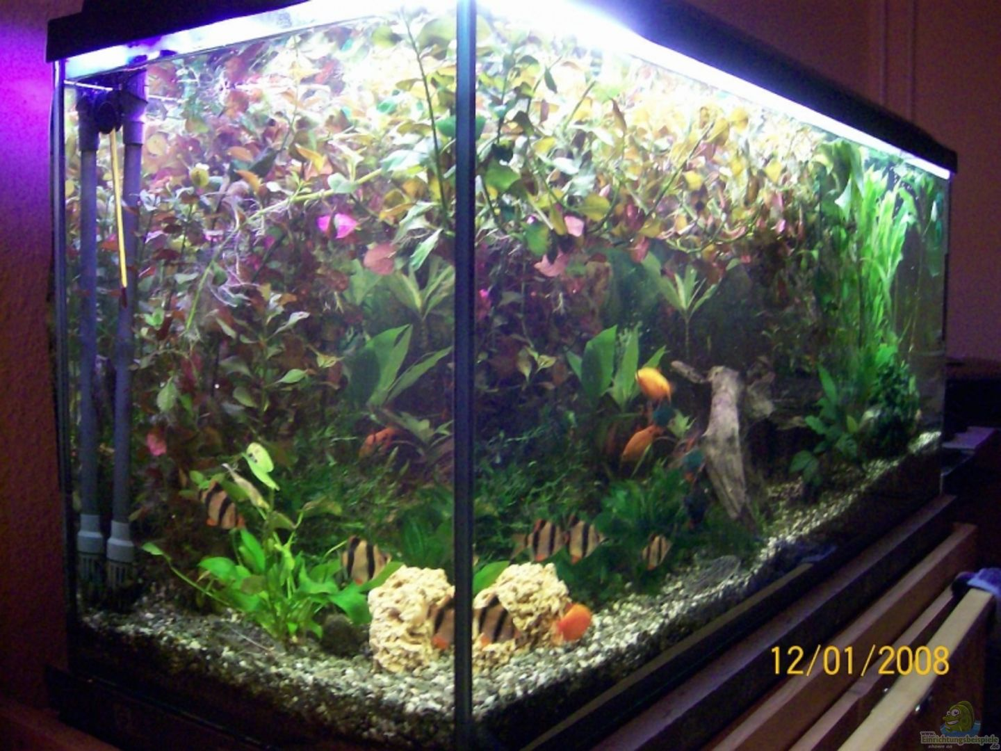 Aquarium von christian wirth becken 5926 for Waterhome aquarium
