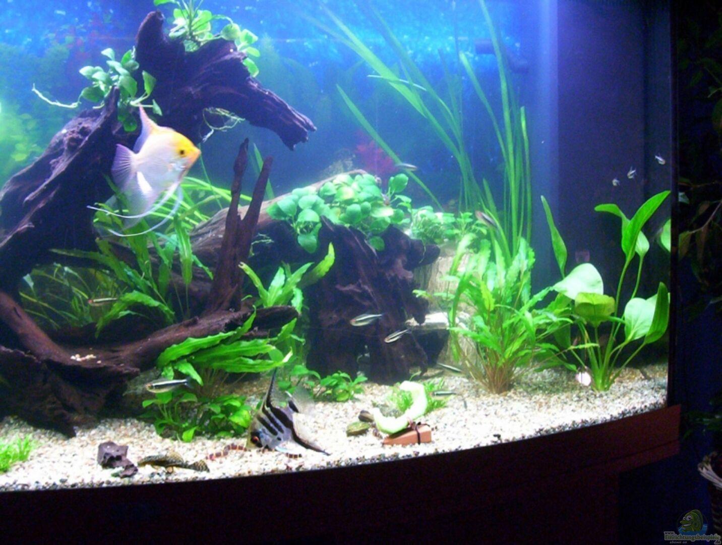 Aquarium von Nicky: Becken 6022
