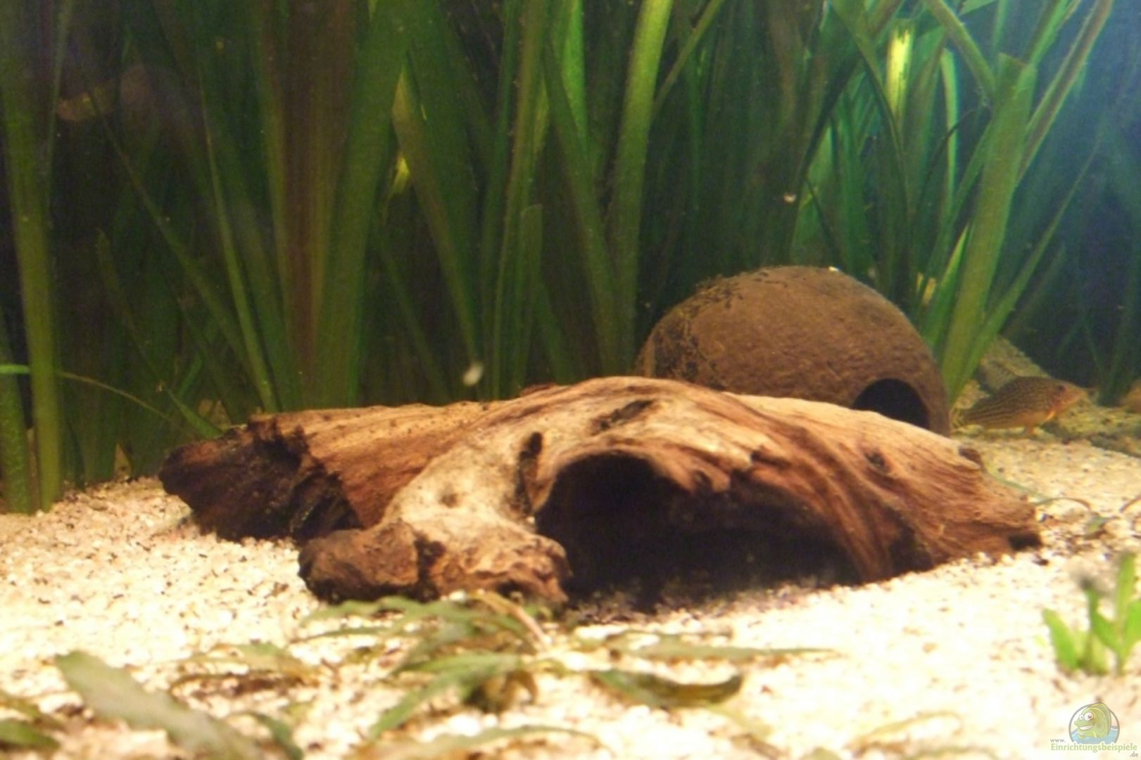 aquarium von udo m ller becken 6042. Black Bedroom Furniture Sets. Home Design Ideas