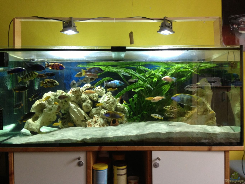 aquarium von el loco malawi tank. Black Bedroom Furniture Sets. Home Design Ideas