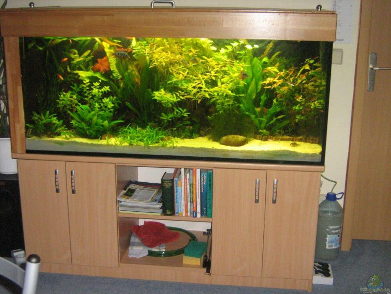 aquarium von dirk mei ner becken 6259. Black Bedroom Furniture Sets. Home Design Ideas