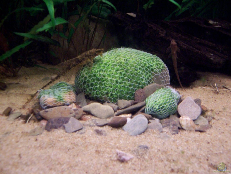 aquarium von bluecolor becken 6276