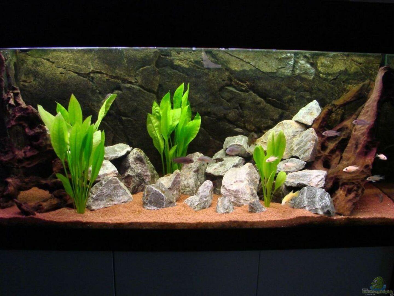aquarium von benjamin leonhardt becken 6363. Black Bedroom Furniture Sets. Home Design Ideas