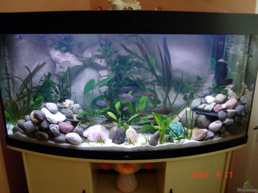 Aquarium von vladi becken 6431 for Zierfische hannover