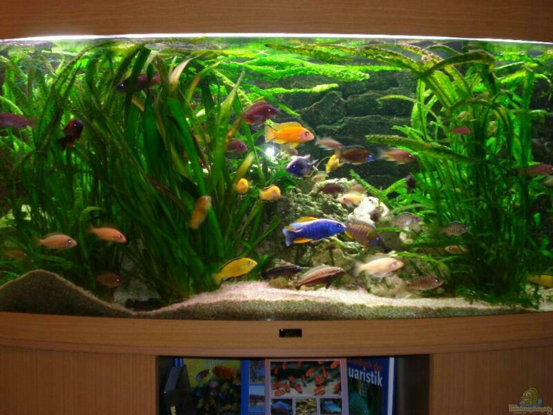 aquarium von torsten koepfinger becken 6513. Black Bedroom Furniture Sets. Home Design Ideas