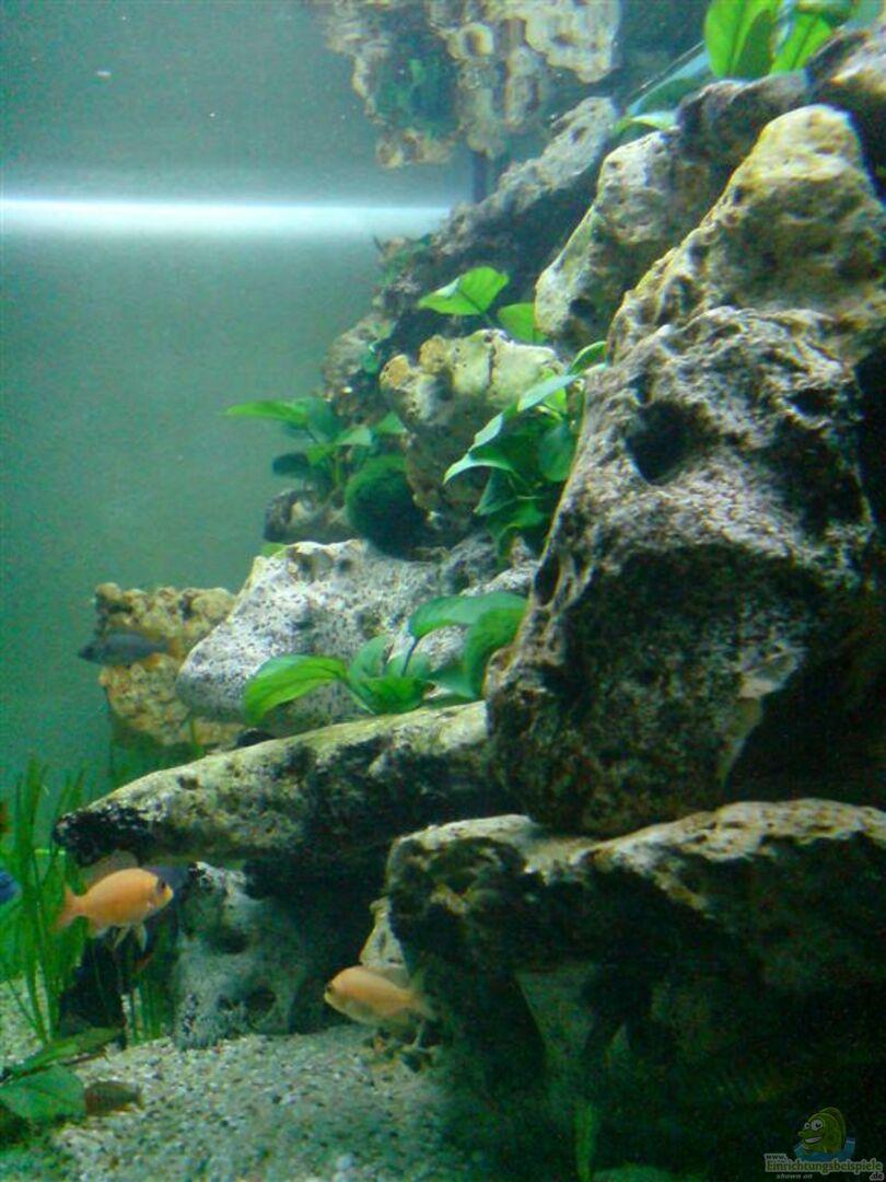 aquarium von aqua man11 becken 6558. Black Bedroom Furniture Sets. Home Design Ideas