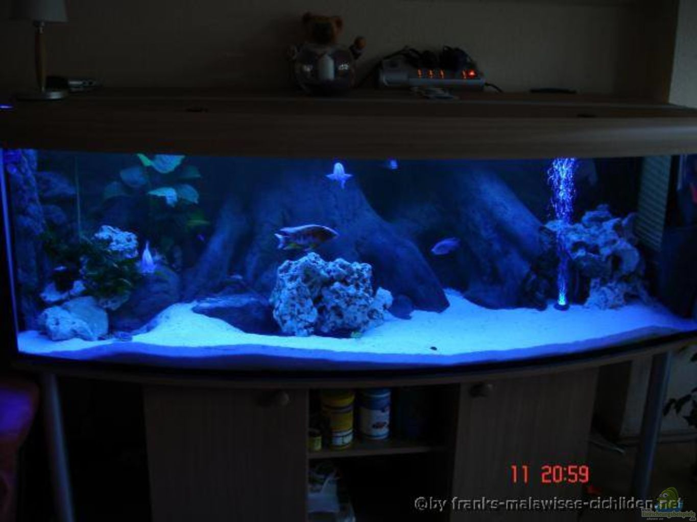 malawifrank aquarium 200 80 80 cm 12 mm glas. Black Bedroom Furniture Sets. Home Design Ideas