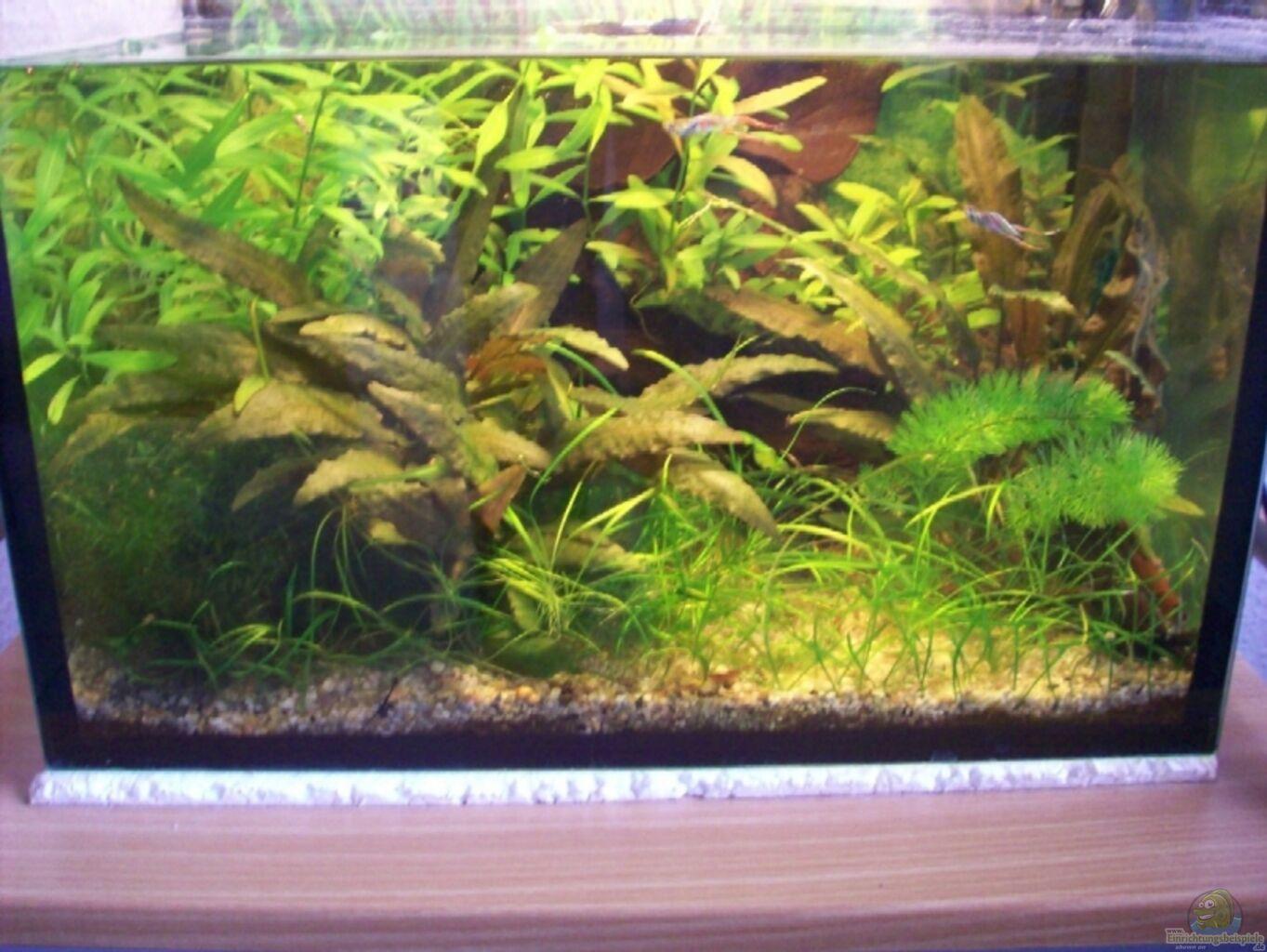 aquarium von anja hermes becken 6598. Black Bedroom Furniture Sets. Home Design Ideas