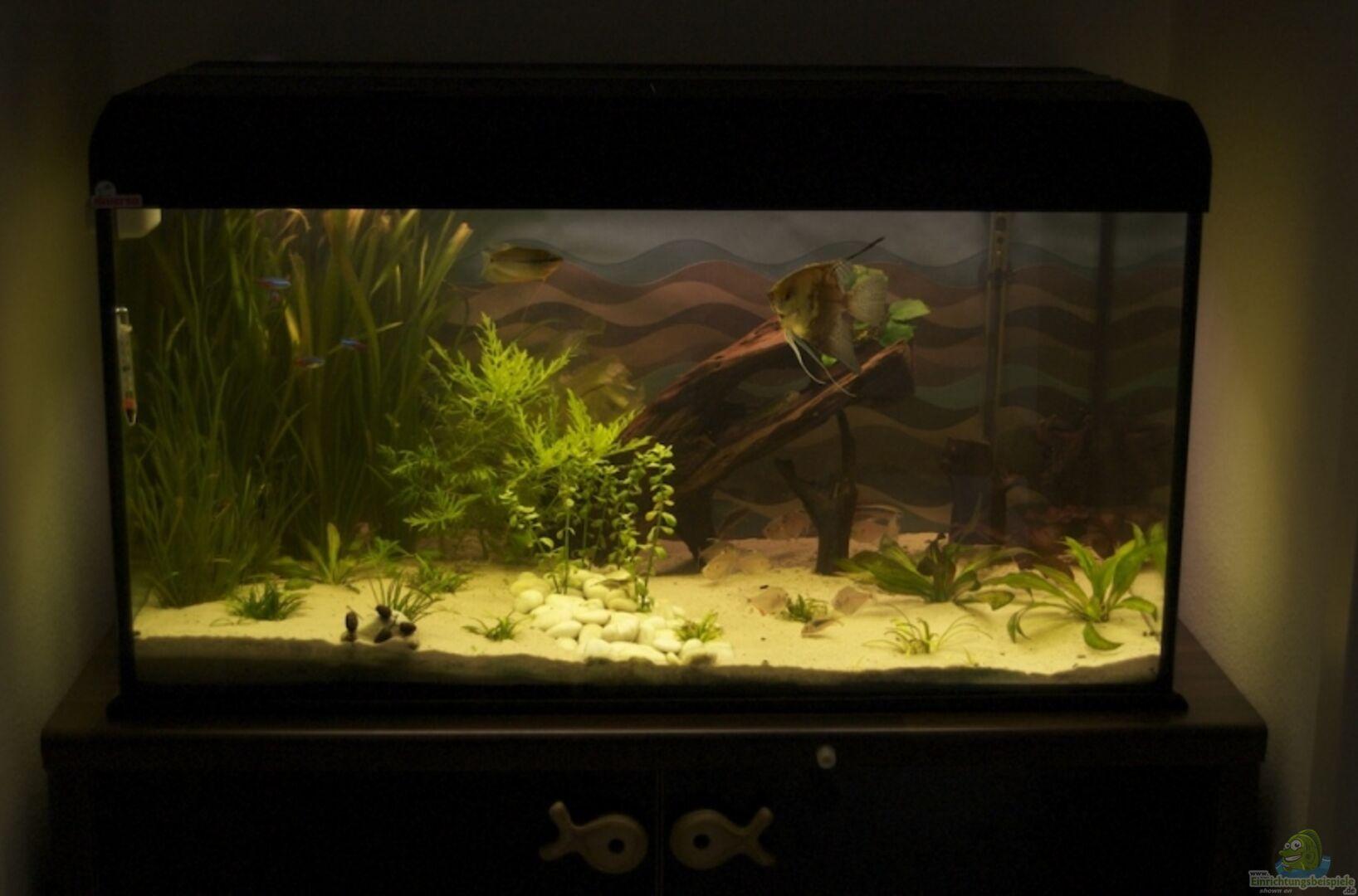 aquarium von nadinsche 6608 250 l gesellschaft. Black Bedroom Furniture Sets. Home Design Ideas