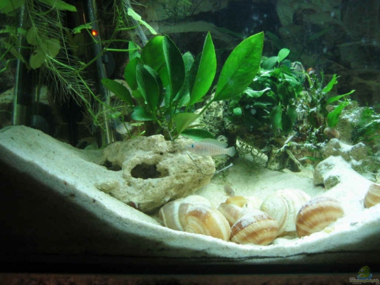 aquarium von farmerin becken 6630. Black Bedroom Furniture Sets. Home Design Ideas