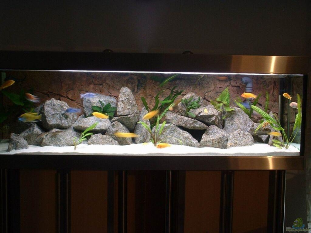 aquarium von sascha bolz becken 6731. Black Bedroom Furniture Sets. Home Design Ideas