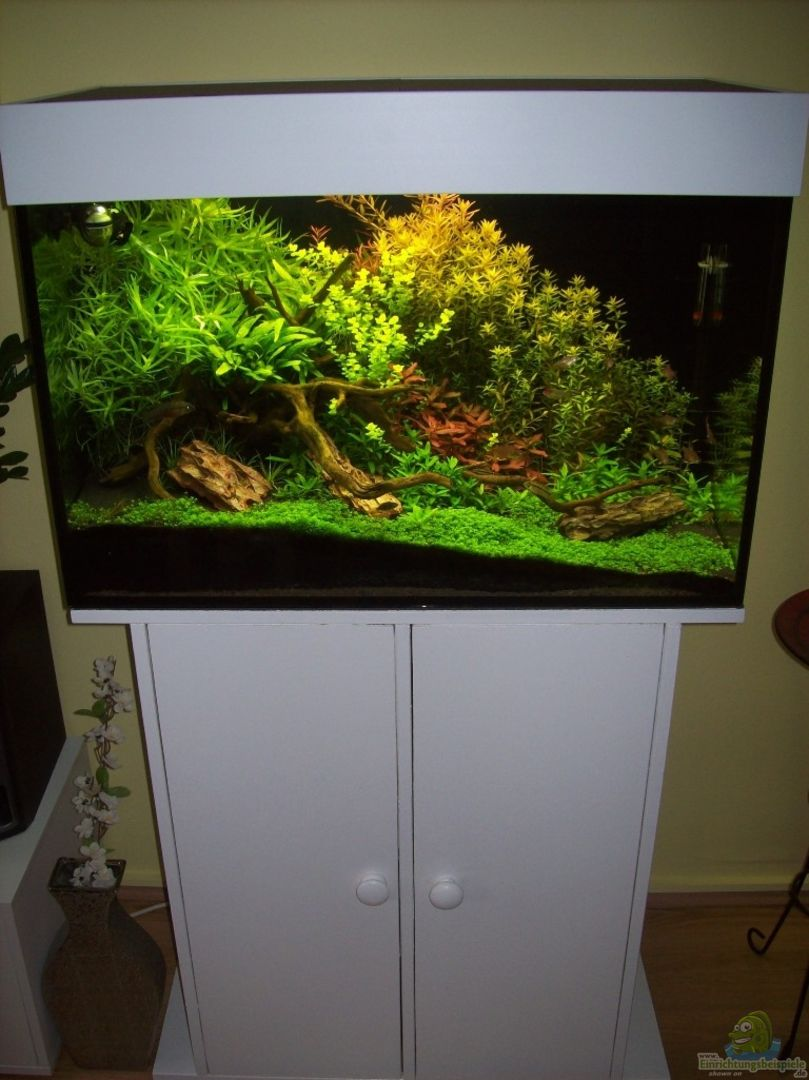 aquarium von gunnar otte becken 6769. Black Bedroom Furniture Sets. Home Design Ideas