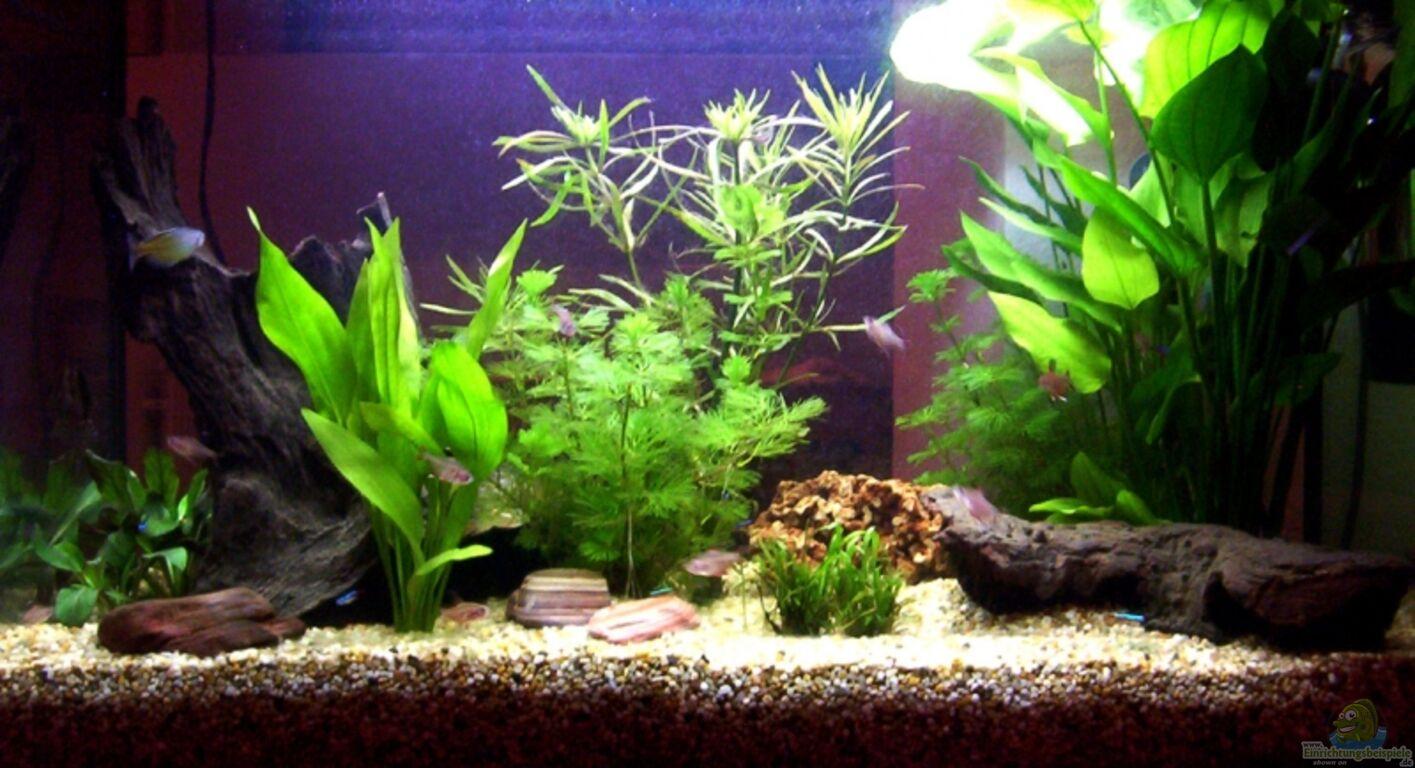 aquarium von marco walter becken 6822. Black Bedroom Furniture Sets. Home Design Ideas