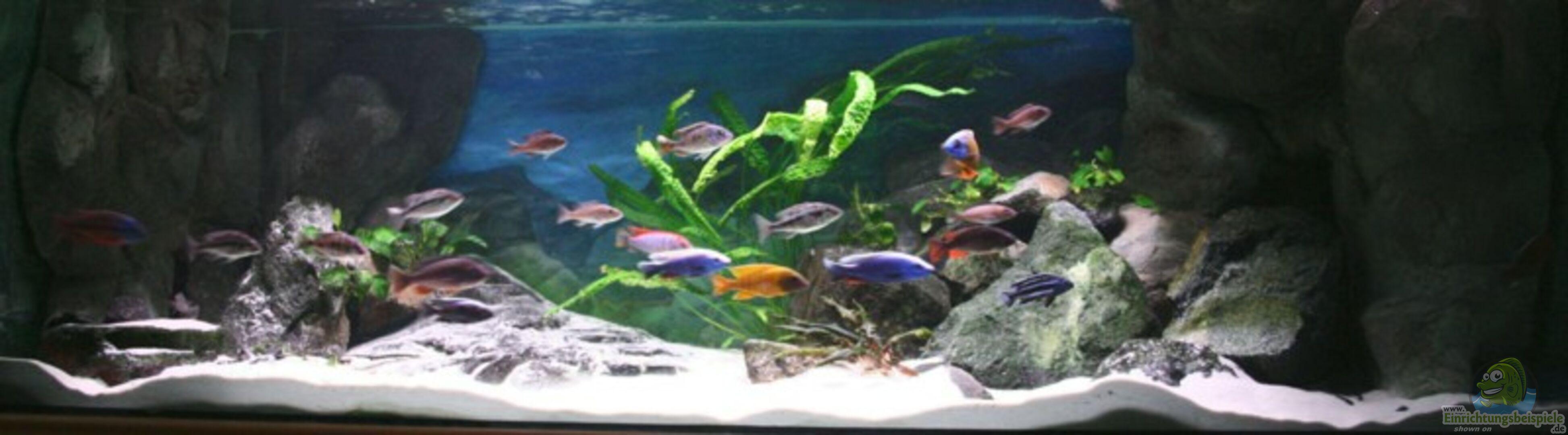 aquarium von p tti becken 6940. Black Bedroom Furniture Sets. Home Design Ideas