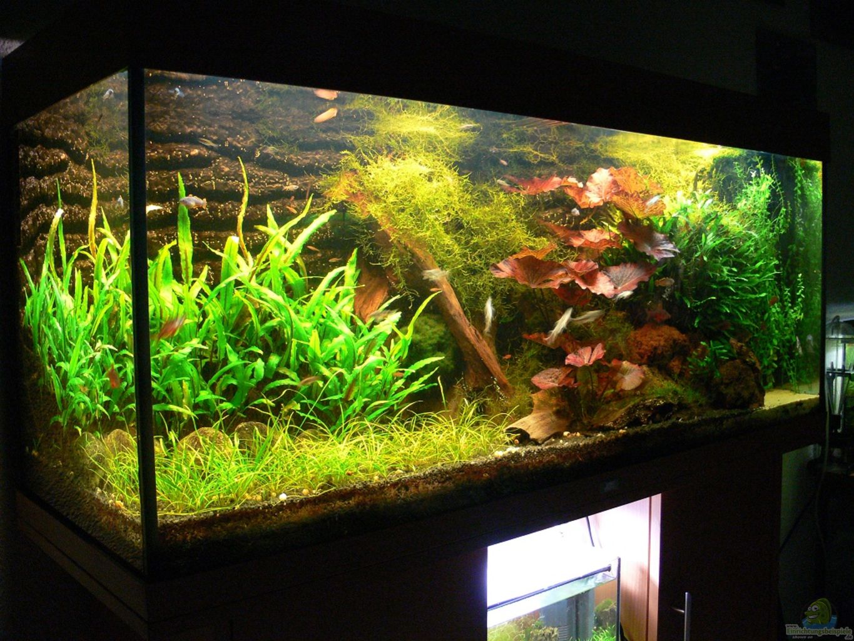 aquarium von derflo asiatisches ufer. Black Bedroom Furniture Sets. Home Design Ideas