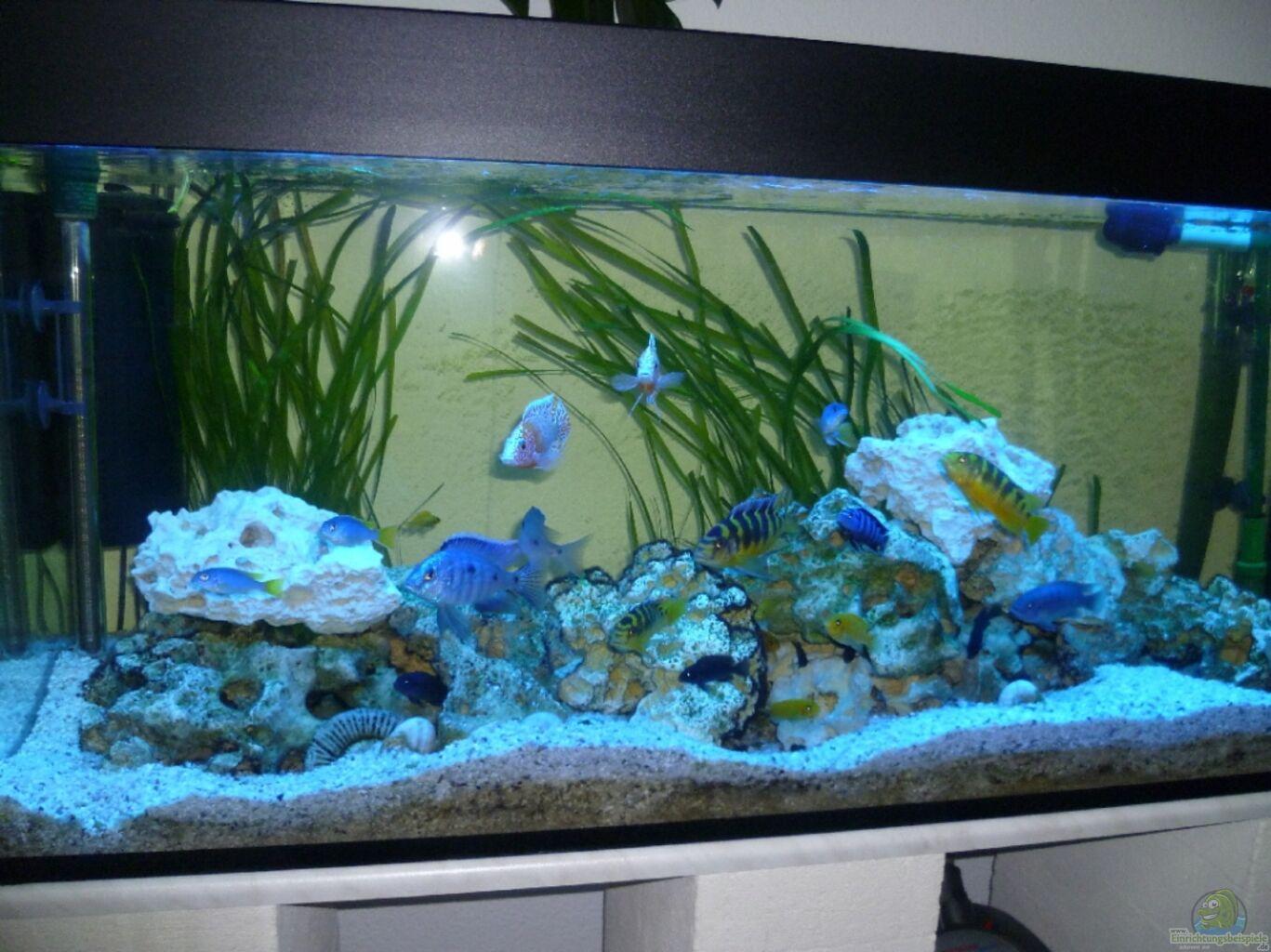 aquarium von jockel malawi gesellschaftsbecken. Black Bedroom Furniture Sets. Home Design Ideas