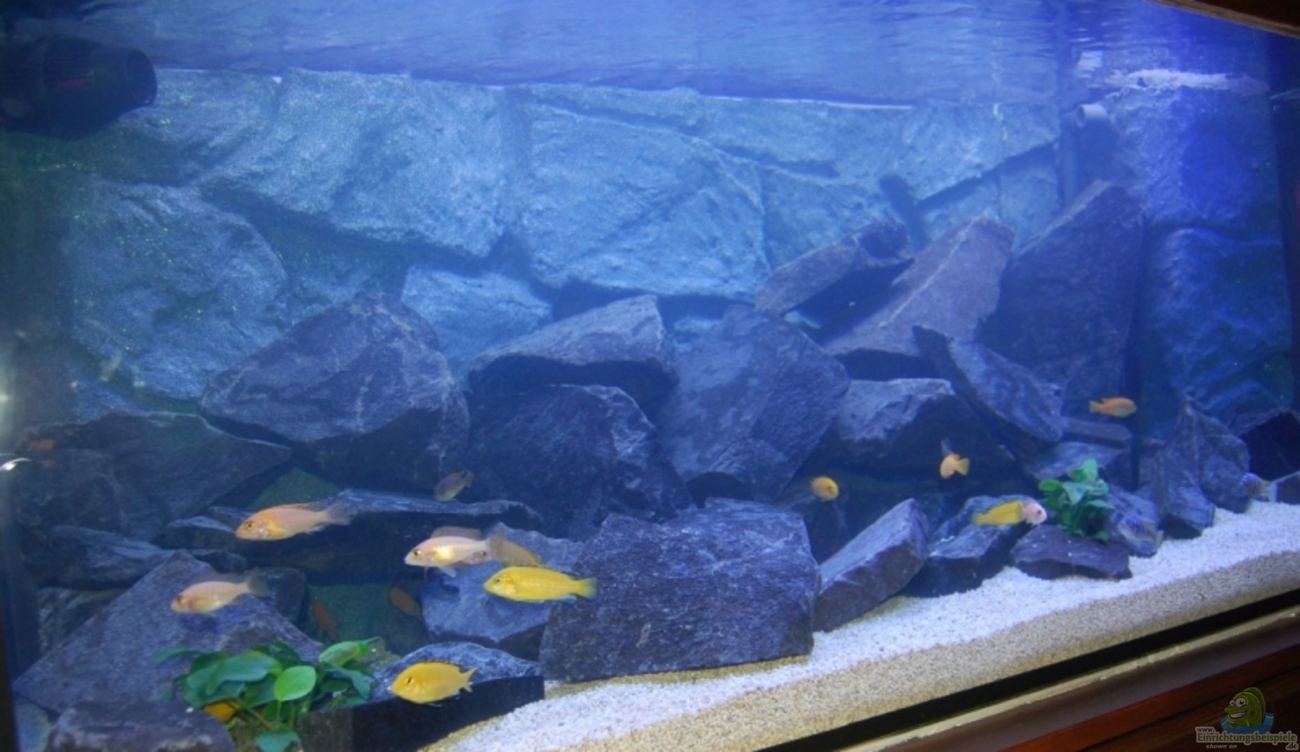 Aquarium von Claus Becker: Becken 7109