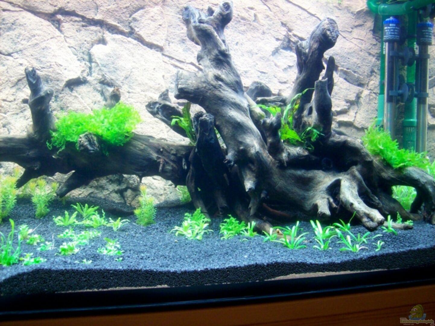 Aquarium von Stefan Reinl: Becken 7267