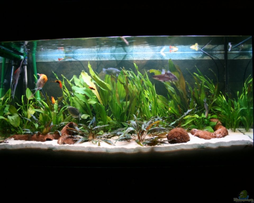 Aquarium von amazonas live becken 7332 for Aquarium 120x40x50