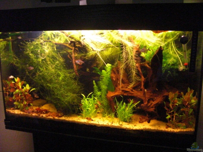 aquarium von sebastian ogorek laetacara domizil. Black Bedroom Furniture Sets. Home Design Ideas