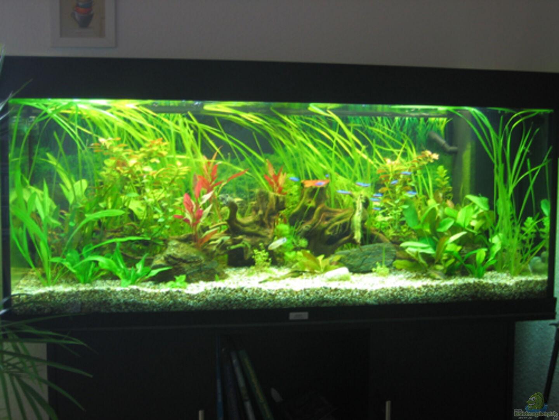 aquarium von macfly becken 7396. Black Bedroom Furniture Sets. Home Design Ideas