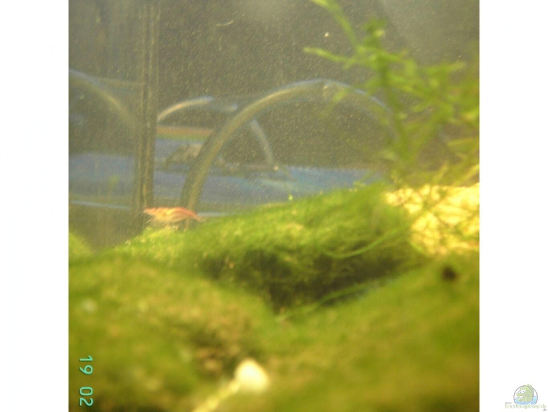 aquarium von lorenz graf becken 7397. Black Bedroom Furniture Sets. Home Design Ideas