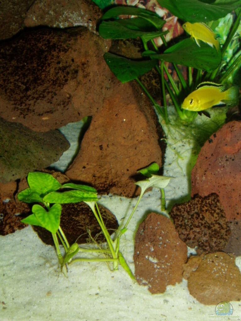 pflanzen im aquarium becken 7528 aus becken 7528 von sirlasso. Black Bedroom Furniture Sets. Home Design Ideas
