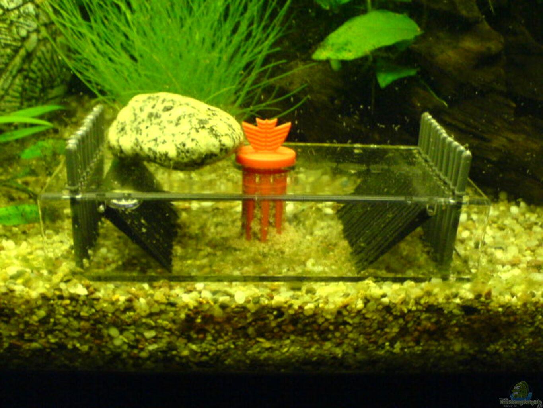 aquarium von dornauge xxl becken 7672. Black Bedroom Furniture Sets. Home Design Ideas