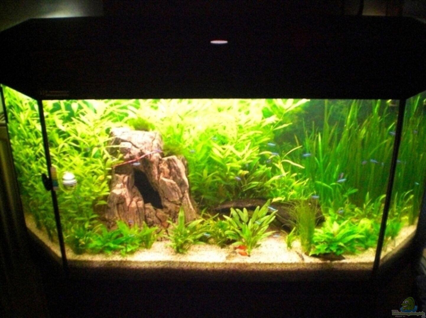 aquarium von thoschi becken 7771. Black Bedroom Furniture Sets. Home Design Ideas