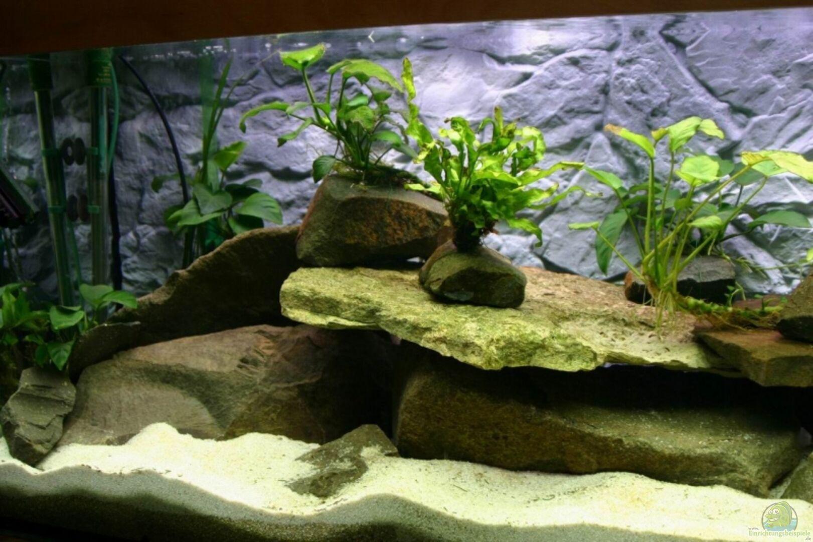 aquarium von sleeper1981 becken 7813. Black Bedroom Furniture Sets. Home Design Ideas