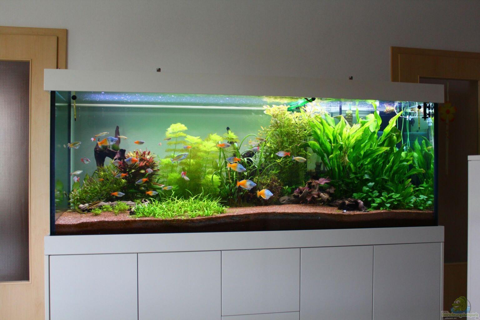 Фото аквариумов травников
