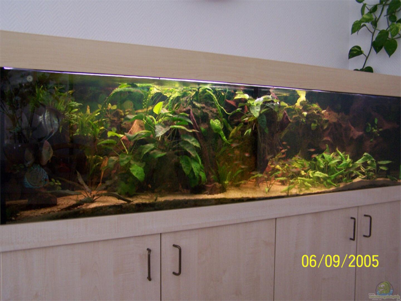 aquarium von aus berlin becken 787. Black Bedroom Furniture Sets. Home Design Ideas