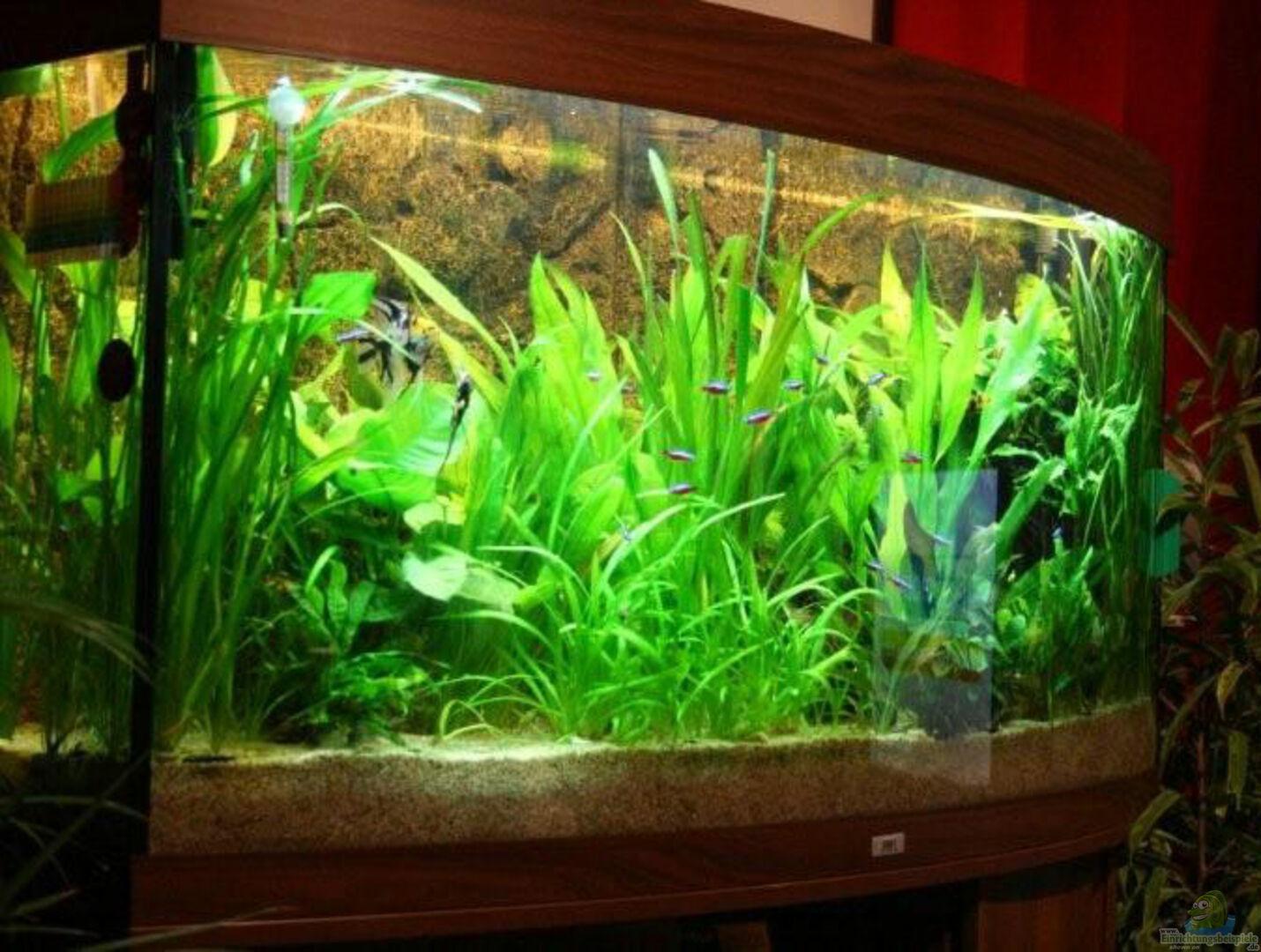 aquarium von markus k becken 8027. Black Bedroom Furniture Sets. Home Design Ideas