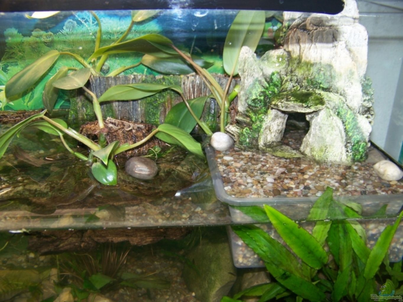 aquarium von nicky becken 8049. Black Bedroom Furniture Sets. Home Design Ideas