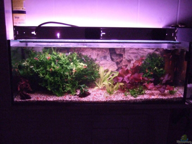 aquarium von frank seifarth becken 8131. Black Bedroom Furniture Sets. Home Design Ideas
